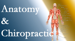 Chiropractic Solutions proudly delivers chiropractic care based on knowledge of anatomy to diagnose and treat spine related pain.